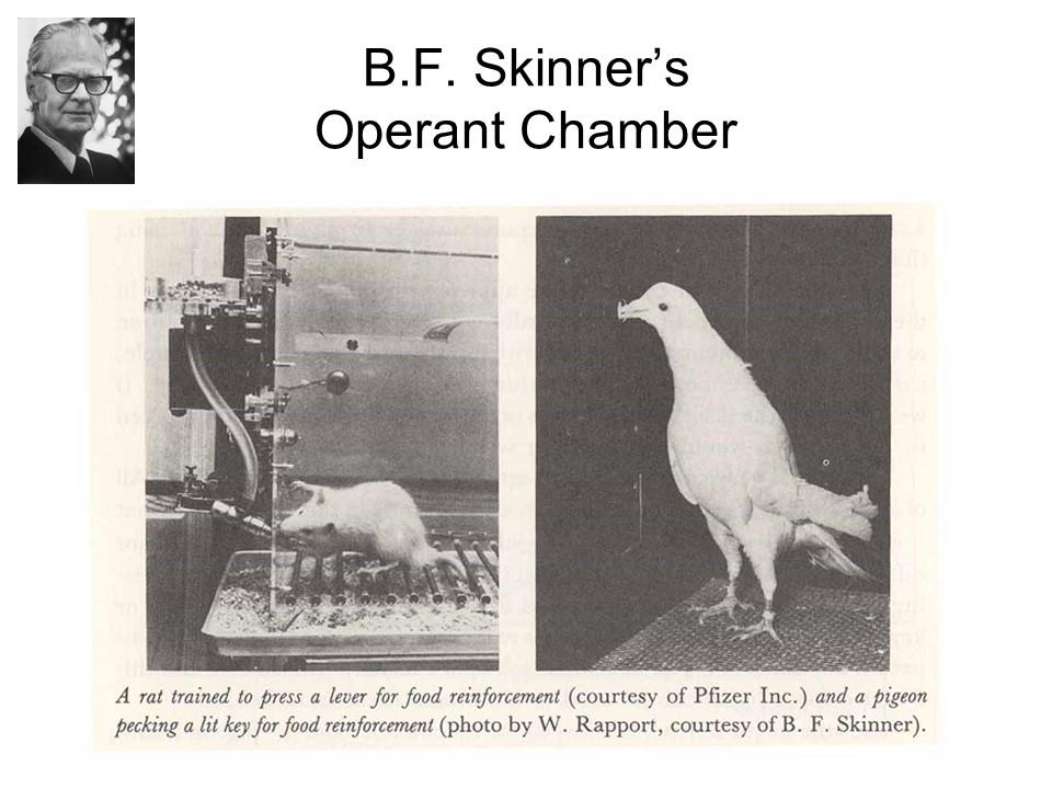 SkinnerOperantChamber